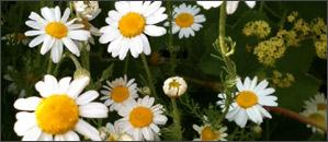 herbal medicine 3 pic