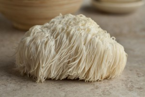 50030752 - single lion's mane mushroom