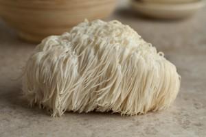 50030752 - single lion's mane mushroom